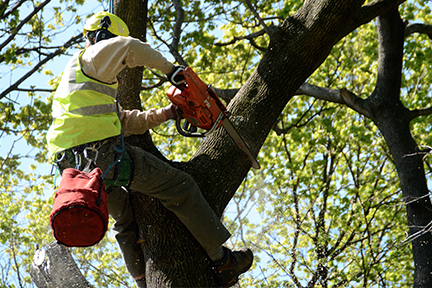 tree_pruning_thumb