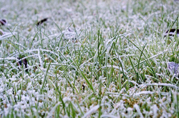 frosty-lawn
