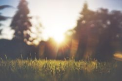 spring morning lawn