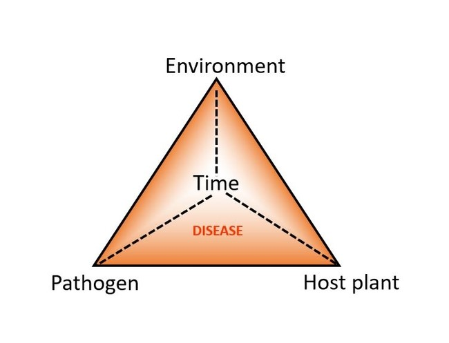tree and shrub disease triangle