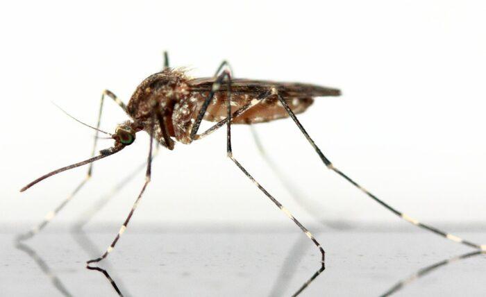 mosquito-83639_1280